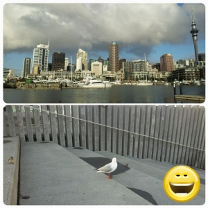 Viaduct Harbour, un air d'amérique... où je me suis fait des amis