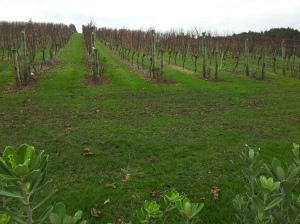 Vue sur une partie du vignoble de Te Motu