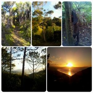 Du bush, du sentier à travers des marécages, des vues sur Matarangi, un coucher de soleil et un truc qui m'a fait sursauter !