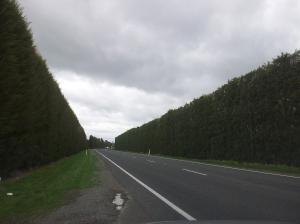 Sur la route... Ici (Te Puke) se trouvent les plus grandes exploitations de kiwis (kiwi vert et jaune)