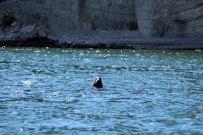 Rencontre avec les phoques