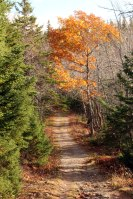 Mt Franey Trail